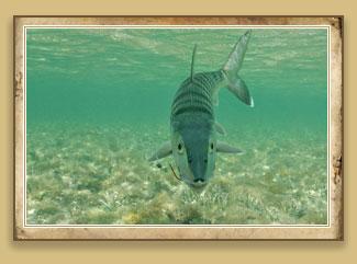 Florida keys fly fishing charters tarpon for Bone fishing key west